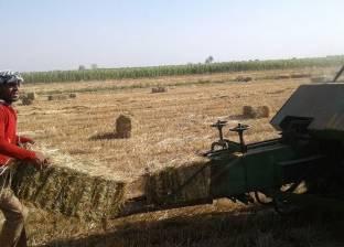«بيئة المنصورة» تحذر المواطنين من الحرق المكشوف لقش الأرز