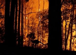 أستراليا تحذر من استمرار اندلاع الحرائق في البلاد لـ8 أسابيع