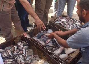 ضبط 600 كيلو سمك فاسد في العاشر من رمضان