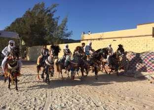 انطلاق المهرجان الأول للفروسية بالقرية البدوية في مطروح.. الجمعة
