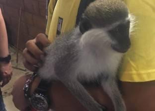 شرطة البيئة تضبط نسناس وبغبغان نادرين بمحل حيوانات أليفة في الإسكندرية