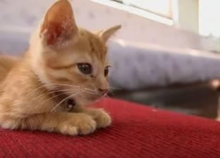 صدمة لعشاق القطط.. تصيب الإنسان بـ5 أمراض خطيرة