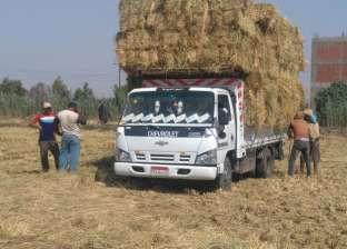 """""""شؤون البيئة بوسط الدلتا"""": جمع 3500 طن قش أرز بـ14 موقعا في الغربية"""