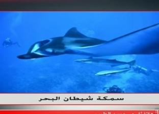 الإنقاذ البحري: الأسماك النادرة ستظهر بالبحر الأحمر بعد انخفاض التلوث