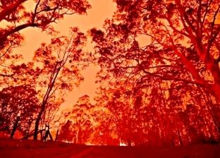 بعد صلاة الاستسقاء لإطفاء حرائق الغابات.. هطول أمطار على أستراليا