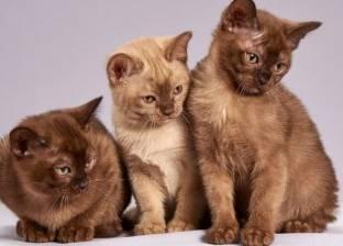 """في يومها العالمي.. المصريون القدماء حلقوا حواجبهم من أجل """"قطة"""""""