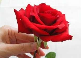بريد الوطن| وردة حمراء
