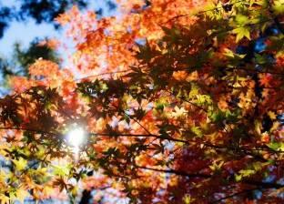 «الأرصاد الجوية» تكشف موعد بداية فصل الخريف على البلاد: يستمر 3 أشهر