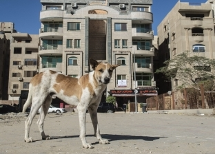 الكلاب الضـالة.. خطر يغزو الشوارع