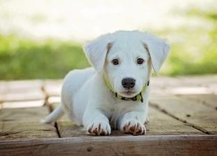 راحة نفسية وجسدية.. فوائد تربية الحيوانات الأليفة