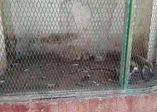 أسيوط: حديقة حيوان «أبوتيج» أقفاص فارغة و«تطوير على الورق»