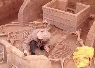 في اكتشاف أثري كبير.. مقبرة بها هياكل خيول وتوابيت في الصين