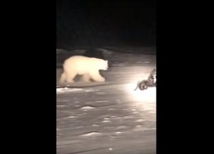 بالفيديو| دب قطبي يلاعب كلبا في آلاسكا