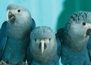 8 طيور انقرضت خلال العقد الحالي ومخاوف من اختفاء المزيد
