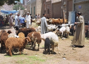 """أسواق الإمام والجمعة والمدبح: """"أغنام كتير والناس مابتشتريش"""""""