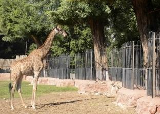 """أشجار """"حديقة الحيوان"""".. غذاء للحيوانات وملاذ من التلوث والحرارة"""