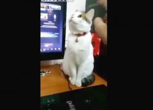ممثلة بارعة.. فيديو طريف لـ قطة تقلد التماثيل