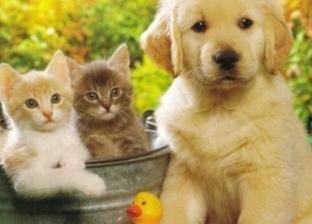 التحصين وبطاقة التسجيل.. شروط جديدة لاستخراج رخصة الكلاب الأليفة