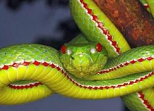 شاب يهوى تربية الزواحف والثعابين: «عايش في غابة»