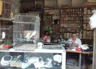 «مصطفى» يتخلى عن هوايته بسبب الغلاء: عصافير زينة للبيع