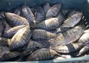 صلاح طاهر: 1.8 مليون طن إنتاج الأسماك في مصر 2018