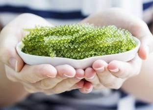 """أغرب الأكلات في اليابان.. أبرزها الشيراكو """"الكيس المنوي للسمك"""""""