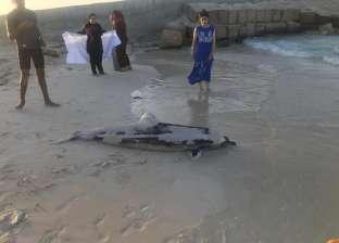 العثور على دولفين نافق في شاطئ مارينا بالساحل الشمالي (صور)