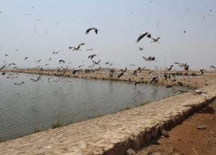 مع بداية موسم الهجرة.. وصول 10 آلاف طائر إلى بحيرات الأكسدة بشرم الشيخ