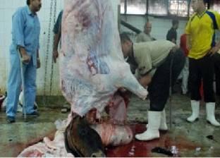 فتح المجازر بالمجان لذبح الأضاحي لأهالي مطروح في العيد