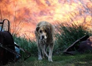 كلب جائع يتسبب في حريق هائل وخسائر بـ20 ألف يورو
