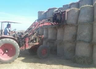 البيئة تعلن انتهاء موسم جمع قش الأرز بالدقهلية بعد حصاد 100% من المحصول