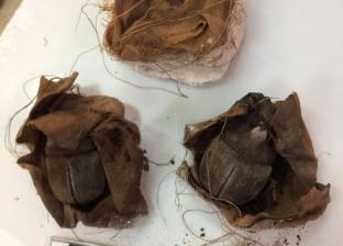 """أمين """"الأعلى للآثار"""": عثرنا على 200 مومياء لحشرة الجعران بمقبرة سقارة"""