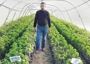 مزارع يحارب البطالة بشتلات المانجو والعنب: الزراعة هى الحل
