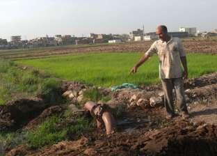 البحيرة: مزارعو كفر الدوار يصرخون: «الأرز بيموت بسبب نقص المياه»