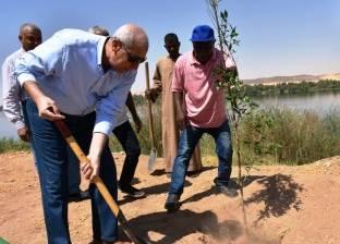 محافظ أسوان: تنفيذ مبادرة تشجير طريق الكورنيش الجديد بزرع 530 شجرة