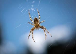 إذا كنت تكره العناكب انتبه لأنها تنجذب لهذه اللون
