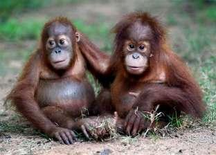 فيروس جدري القرود.. جائحة جديدة في انتظار البشرية: من الحمى حتى العمى