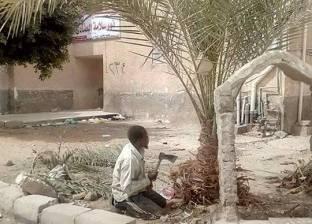 بالصور| حملة لتقليم أشجار النخيل في رأس سدر بجنوب سيناء