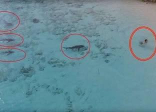 بالفيديو| طفل ينجو بإعجوبة من الموت بين 4 أسماك قرش