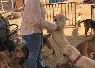 ملجأ «حنان»: إيواء وعلاج مجاناً لـ«كلاب الشوارع»