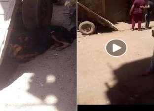 نيابة الزقازيق تحقق مع جزار متهم بتعذيب وسحل كلب في الشرقية