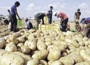 روشتة للحد من ارتفاع أسعار البطاطس الجنونية