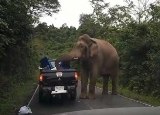 بالفيديو| فيل هائج يهاجم سيارة عائلة