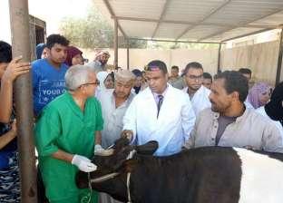 بدء حملة تحصين الماشية ضد الحمى القلاعية في مطروح 2 فبراير