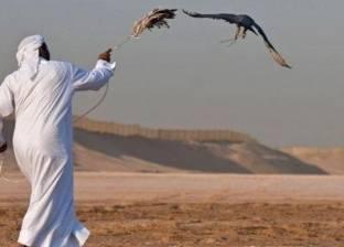 """""""المهنة: صياد صقور"""".. """"بيزنس أبو المرازيق"""" يبدأ بـ""""فرخ شاهين"""""""