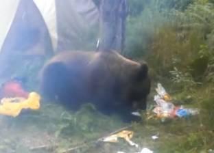 بالفيديو| دب يقتحم خيمة سائخ ويأكل طعامه