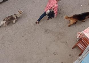 الكلاب والفئران تهاجم أهالي المنوفية.. وإصابة الآلاف
