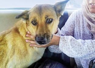 «عسلية».. كلبة بـ7 أرواح.. نجت من 6 حملات قتل وحادث دهس