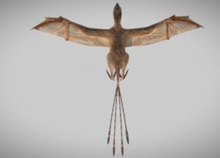 """عاش على الأرض قبل 163 عاما.. اكتشاف """"ديناصور خفاش"""" في الصين"""