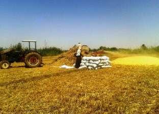 """""""مركز معلومات الحكومة"""": توزيع الأسمدة على المزارعين مستمر حتى 30 سبتمبر"""